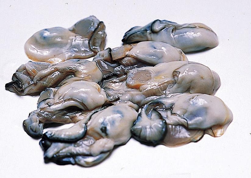 牡蠣(養殖)の画像